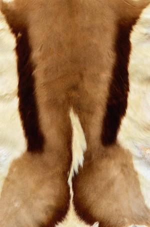 动物毛毯-ID:4003556