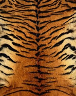 动物毛毯-ID:4003850