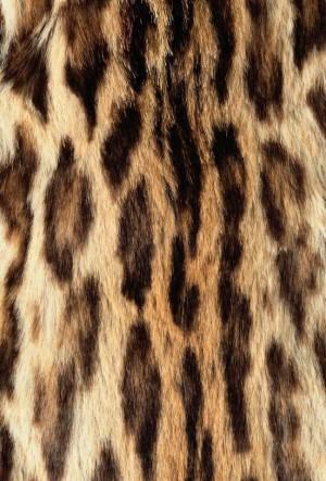 动物毛毯-ID:4004115