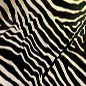 动物毛毯-ID:4004592
