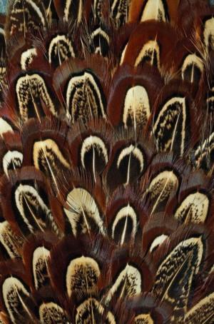 动物毛毯-ID:4005978