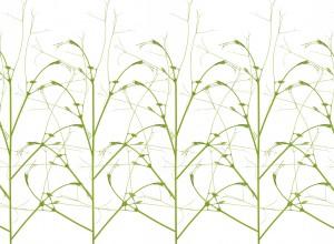 现代植物图案花纹壁纸-ID:4016387