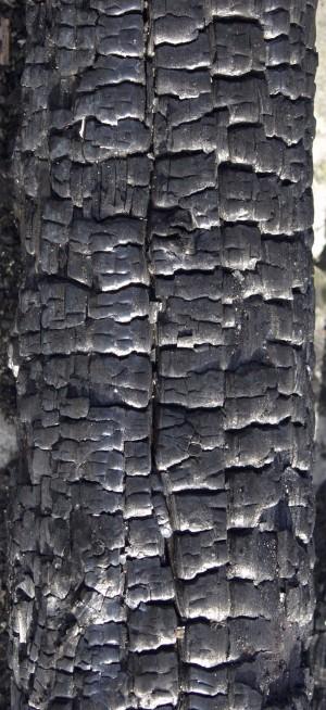 燃烧过的残旧木-ID:4023387