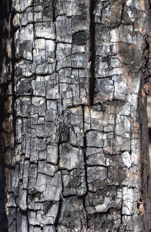 燃烧过的残旧木-ID:4023718