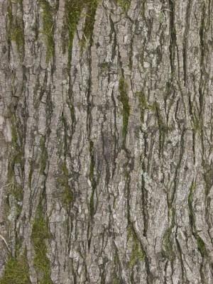 树干-树皮-ID:4040249