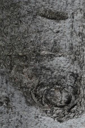 树干-树皮-ID:4040292