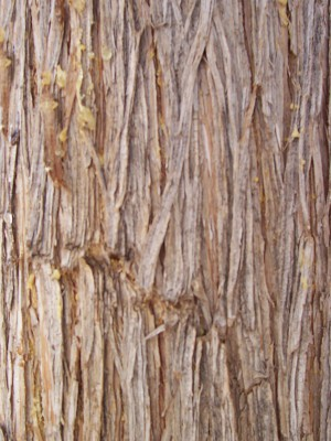 树干-树皮-ID:4040430