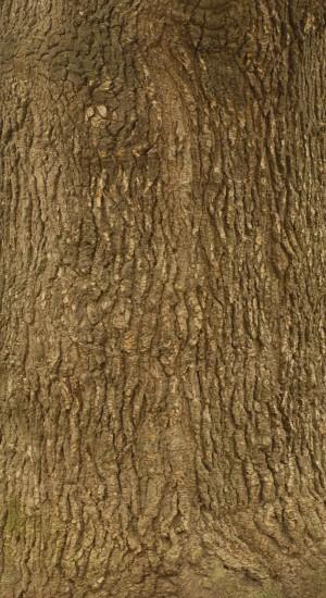树干-树皮-ID:4040712