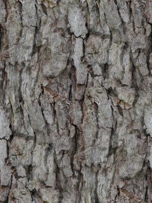 树干-树皮-ID:4041054