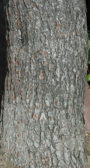 树干-树皮-ID:4041070