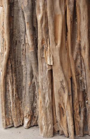 树干-热带的-ID:4041589