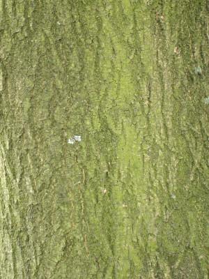 树干-树皮-ID:4041648