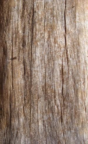 树干-剥去树皮-ID:4041681