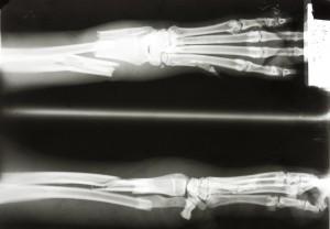 动物X射线-ID:4041836